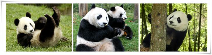 独家安排~北京市动物园(熊猫馆)