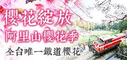 (團體)櫻花綻放 阿里山櫻花季 全台唯一鐵道櫻花