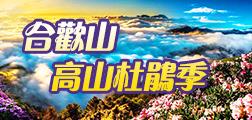 (主題)合歡山高山杜鵑季
