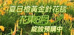 (團體)夏日橙黃金針花毯 花東8月綻放預購中