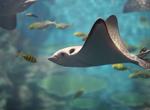 【本週推薦-團體自由行1-圖】太SHARK了! 韓國激推鯊魚餵食秀  釜山SEA LIFE水族館 甘川洞彩繪文化村