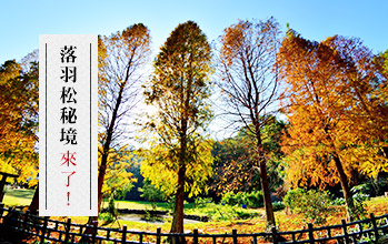 【行程21-圖】泰安秋季限定美景 挖地瓜 冰心地瓜大福DIY 一日遊$799起