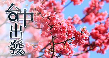 (圖)花開八仙山.春節賞櫻趣