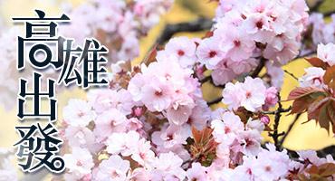 (圖)春遇阿里山.櫻花綻放