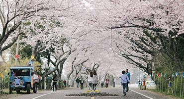 (圖)濟州✦無購物站含小費 在韓國收集兩種浪漫春色