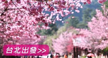 (圖)武陵櫻花季保證入園
