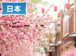 (圖)春遊日本正好賞花|春遊日本三大絕景◆ 櫻花、紫藤、鬱金香◆ 再享精選美食、升等住宿