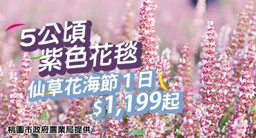 (主題旅遊)5公頃紫色花毯!仙草花海節1日$1,199起